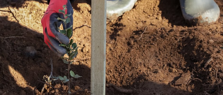 Portugal ajuda campanha de reflorestação em Bafatá