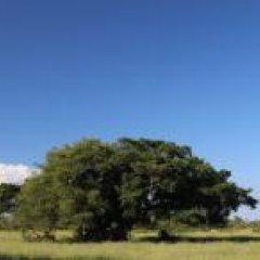 Porto Alegre terá primeira Reserva Particular Natural