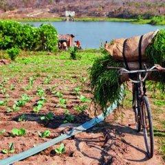 Voucher agrícola em Nampula