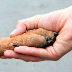 Sintra ajuda famílias carenciadas a cuidar de animais